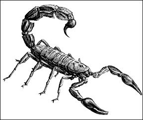 drawings of scorpions