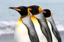 penguin coloring pages-5photo.jpg