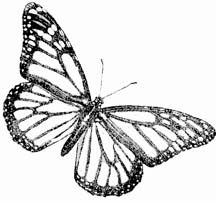 butterfly drawings