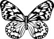 printable butterfly-coloring-sheets