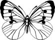 butterfly pieris coloring pages