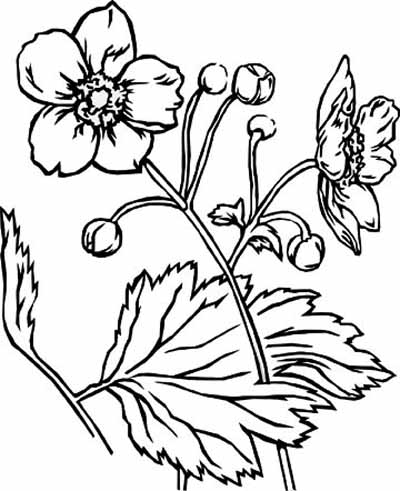 Flower Coloring Pages on Flowers Coloring Pages   Free Kid Coloring Pages   Zimbio