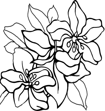 Flower Coloring Pages on Flower Coloring Pages