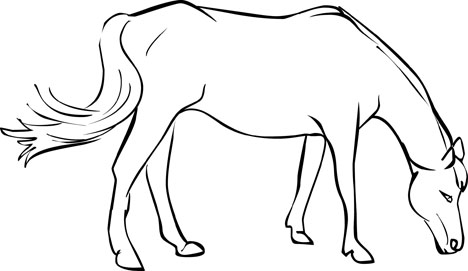 free horse coloring pages - Horse Coloring Page