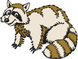 My Raccoon Friend - It's the only image I had.