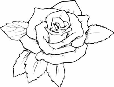 rose coloring page - Rose Coloring Pages