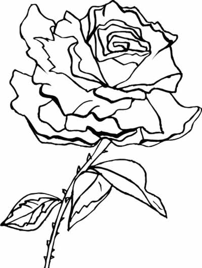 rose coloring pages - photo#34