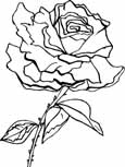 alba rose coloring page