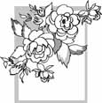 rose shrub coloring pages