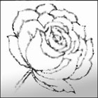 printable roses coloring page